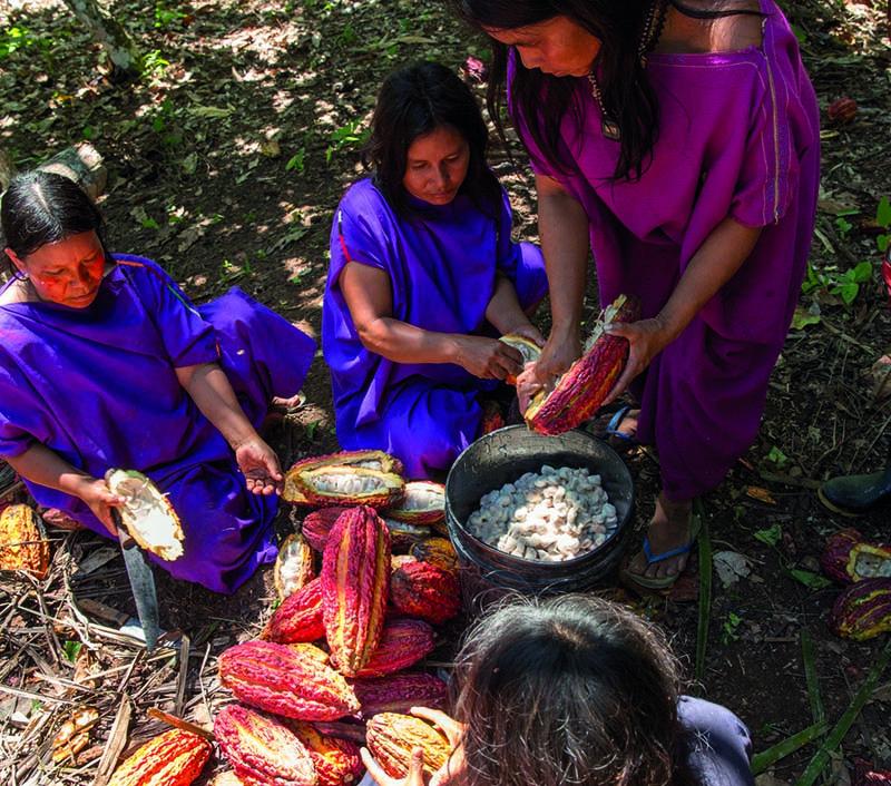 Asociación de Productores Kemito Ene - <b>Peru</b><br>