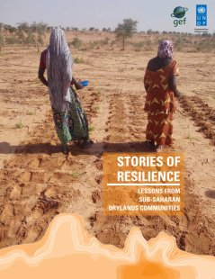 Stories of Resilience<br><br><br>
