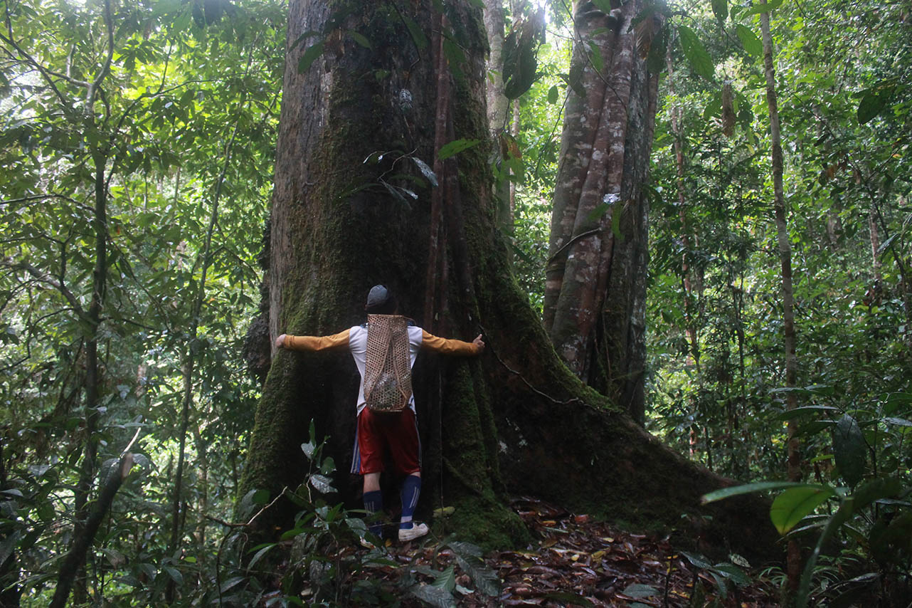Alliance of the Indigenous Peoples of the Kayan Mentarang National Park - Indonesia